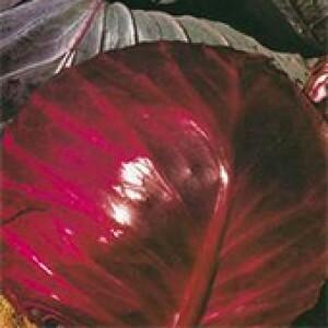 Repolho Hibrido Roxo Super Red (Ref 246) - 1 G