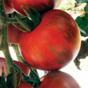 Tomate Tigre - 20 sementes
