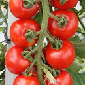 Tomate Híbrido Wanda Cerejinha - 20 sementes