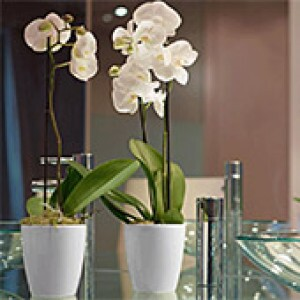 Vaso Orquídea 15x16cm - Branco - Vasart
