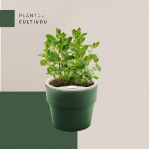 Vaso Autoirrigável Grande - Linha Plantar - Cor Verde Botânico
