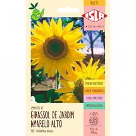 Girassol de Jardim Amarelo Alto (Ref 392)