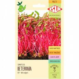 Semente para Microverde de Beterraba (Ref 857)