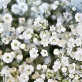 Mosquitinho Snowflake Dobrado Branco (Ref 775)