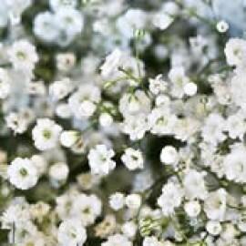 Mosquitinho Snowflake Dobrado Branco - Gypsophila  5 g