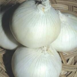 Cebola White Creole - (Ref 079)