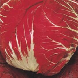 Almeirão de Cabeça Vermelho (Ref 054)