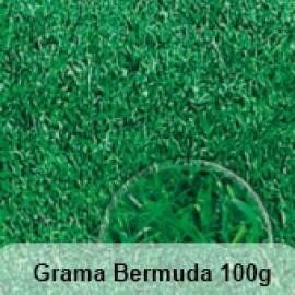 Grama Bermuda 100g