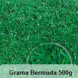 Grama Bermuda 500g