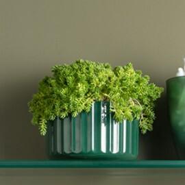 Vaso Groove Mini 06 alt x 10 cm - VG 100 - Cor Verde Botanic
