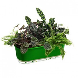 Jardineira 14x40 cm - Autoirrigável - Cor Verde Escuro