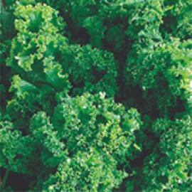 Mostarda Crespa (Ref 187)