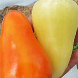 Pimenta Ibiúna  - 50 sementes