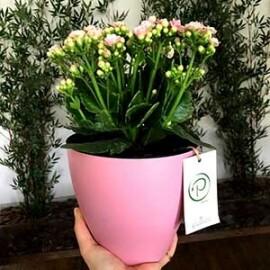 Vaso Autoirrigável 16x17 cm - Fosco - Rosa Quartz e Marrom - Plantiê