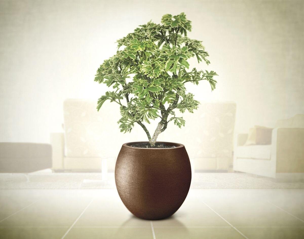 Vaso Grande Of Comprar Vaso Oval Para Plantas Grande Grafiato 42 Cor