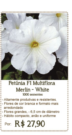 Petunia Merlin White