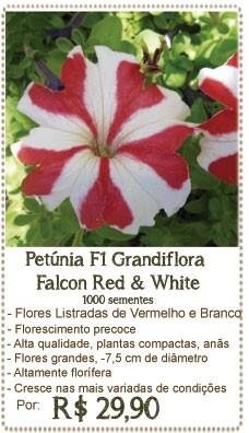 Petunia Falcon Ref