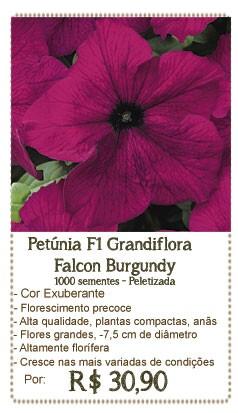 Petunia Falcon Burgandy