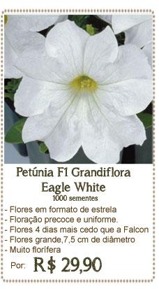 Petunia Eagle White