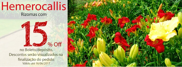 Hemerocallis 15% Off